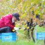 10月22日(日) しりべしアグリツーリズム(ワイン用ブドウ&ワイナリー)